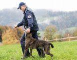 """Diegten BL - """"Macho"""" gewinnt die Polizeihundeprüfung"""