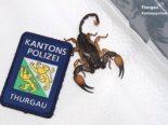 Weinfelden TG - Skorpion im Koffer