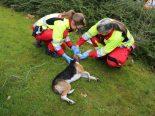 Steinhausen ZG - Hund aus Wohnung gerettet