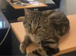 Baar ZG - Polizei bringt Katze wieder nach Hause
