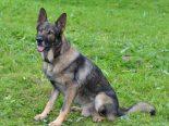 Luzern LU - Polizeihund Mitch stellt Diebin (35)