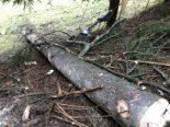 Charmey FR - 23-Jähriger bei Holzfällerunfall verletzt