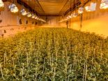 Rothenhausen TG - Getarnte Drogen-Hanfanlage ausgehoben