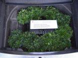 St. Margrethen SG - 3300 Hanfsetzlinge in Reserveradmulde gefunden