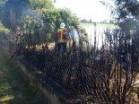Pfyn TG - Thuja-Hecke in Brand geraten