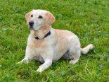 Luzern - Betäubungsmittelspürhund Oraya findet zwei Kilogramm Kokain