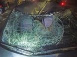 Romanshorn TG - Pferd nach Unfall schwer verletzt und eingeschläfert