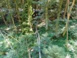 Bernhardzell SG - Mann bei Forstarbeiten schwer verletzt