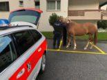 Polizei fängt in Davos herrenlose Pferde ein