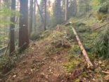 Oberägeri ZG - 13-Jähriger bei Forstunfall lebensbedrohlich verletzt
