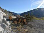 Felsberg GR - Mann (25) unter Baumstamm eingeklemmt und schwer verletzt