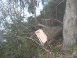 Holzerunfall in Gais AR - 36-Jähriger von Baumstamm getroffen