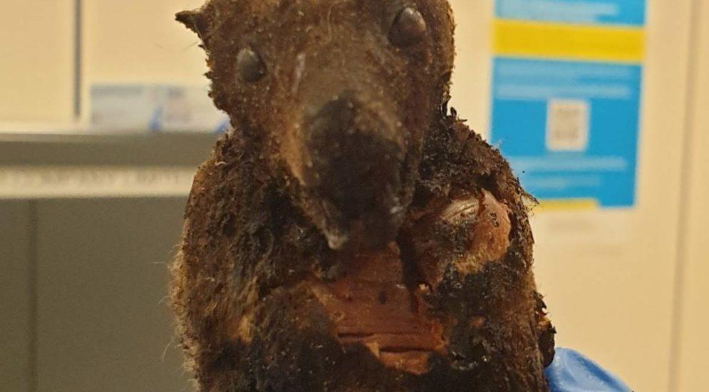 Zöllner findet vier getrocknete Fledermäuse und zwei Kilogramm tote Raupen