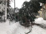 St.Gallen SG - Großer Baum umgestürzt