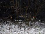 Unfall Metzerlen SO: Autolenker prallt in Baum