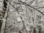 Basel-Landschaft BL - Schwerer Schnee auf Bäumen birgt hohes Sicherheitsrisiko