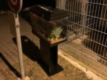 Urtenen-Schönbühl BE: Zierfische lebend entsorgt