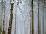 Frauenfeld TG - 150 Meldungen wegen umgestürzten Bäumen