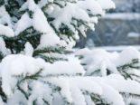 Schaffhausen: Polizei warnt - Bäume können Schneemassen nicht mehr tragen