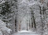 Winterthur ZH - Wälder und Bäume dringend meiden!