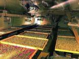 Kirchlindach: Zwei Hanf-Indooranlagen mit 145 Hanfpflanzen ausgehoben