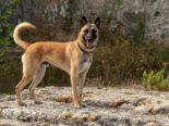 Heiden AR: Polizeihund findet vermissten Mann
