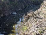 Rothenburg LU - Hohes Fischsterben durch Gülle im Gewässer