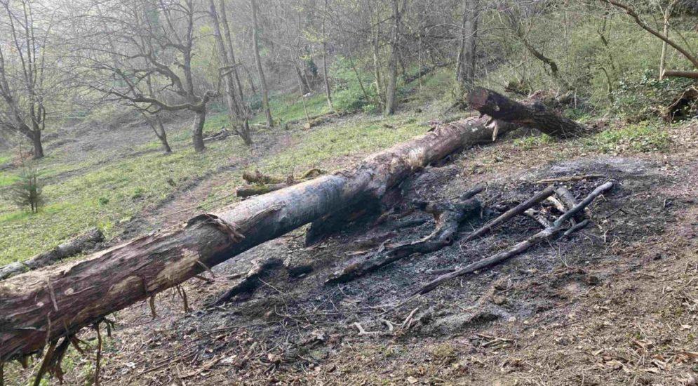 Gränichen AG: Waldbrand wegen liegengebliebener Asche