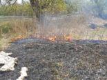 Scherzingen TG - Feuerwehreinsatz wegen Schilfbrand