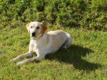 Luzern: Drogendealer dank Polizeihund Sina gefasst