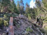 Tragödie in Ernen VS: 24-Jähriger stirbt bei Forstarbeiten
