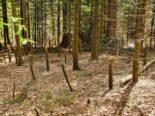 Winterthur ZH: Unbekannte hacken Bäume ab und legen Feuer im Wald