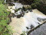 Heimenschwand BE: Fischsterben durch Gülle im Bach