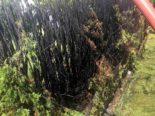 Züberwangen SG: Unkraut abgebrannt - Thuja-Hecke fängt Feuer