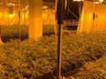 Regensdorf ZH: Hanf-Indoor-Anlage mit über 1000 Pflanzen ausgehoben