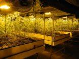 Rothenthurm SZ: 1'000 Pflanzen mit zu hohem THC-Gehalt sichergestellt