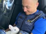 Basel-Stadt: Verängstigtes Kaninchen erfolgreich eingefangen