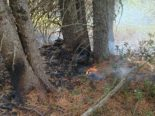Surses GR: Mottbrand in Wald
