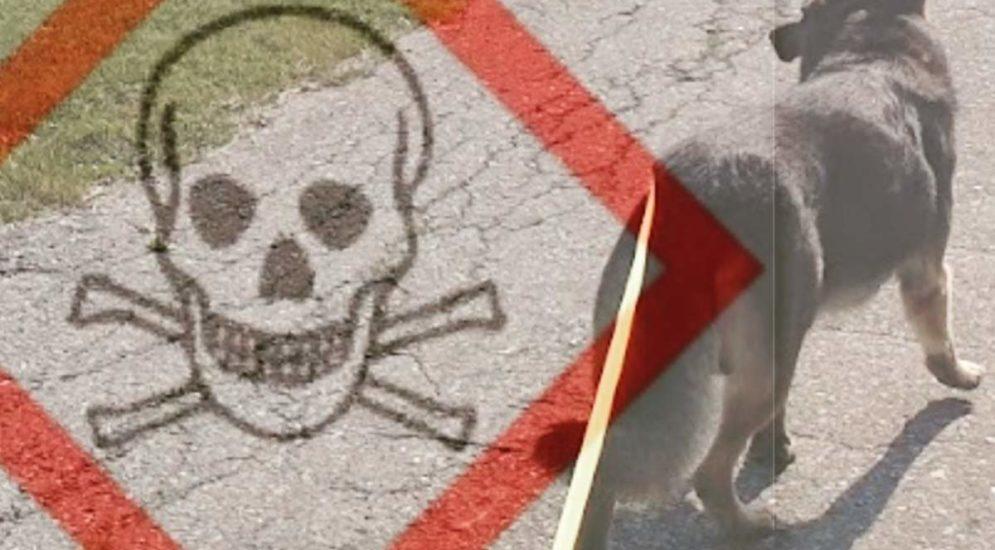 Vorischt: Giftköder in Klingnau AG!