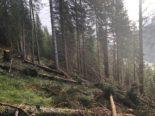 Splügen UR: 18-jähriger Forstwart bei Arbeitsunfall verletzt