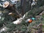 Arbeitsunfall in Andeer GR: Forstarbeiter (21) durch REGA geborgen